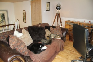 This is my office at the top of the stairs with a sofa full of cats - how perfect is that?