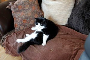 Joe reclining on the sofa - a change from his usual position next to the food bowl