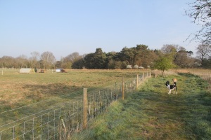 bridleway and smallholding