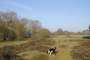 Heath behind our site