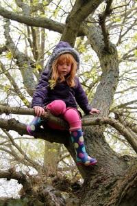 Holly climbing Tree