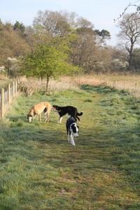 morning walk2