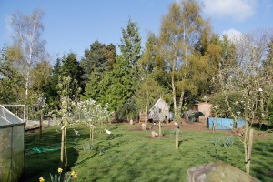 replanted orchard