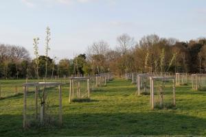 smallholding orchard
