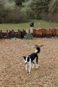 dogs and revetments