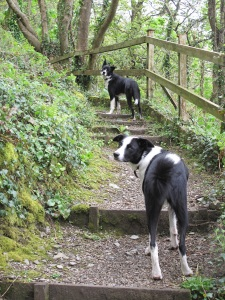 and on the path down to the cottage