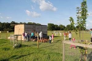 hens, alpacas and kids