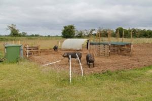 pig shelter2