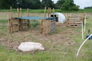 Of course the British Lops got a shelter too.