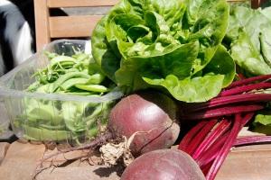 veg from margo