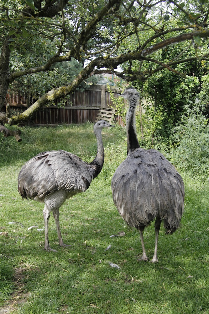 How to Start Emu Farming in India (Full Business Guide)