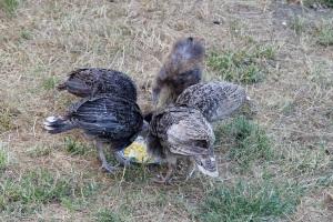 Sharing scrambled eggs
