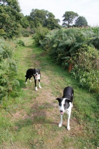 Dogs on bridleway