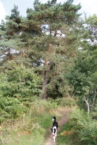 morning walk-Daisy-wood