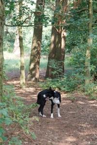 morning walk - Kai in wood