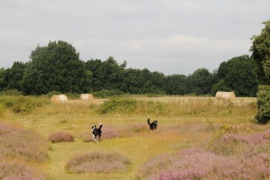 The heath and fields are just behind the site