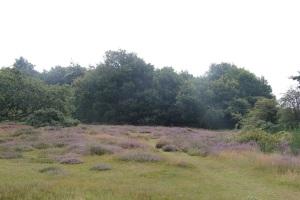 morningwalk-heath