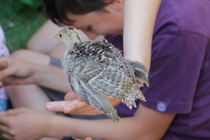 perching chick