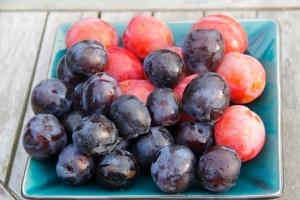 plums-fruit