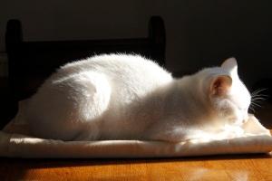 Angelic cat