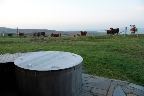 cows and hot tub