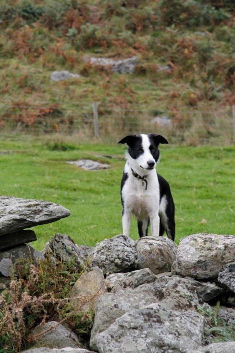 Daisy Dog2