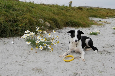 Daisys2