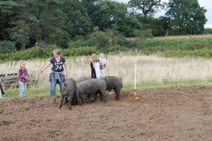 Distracting the pigs
