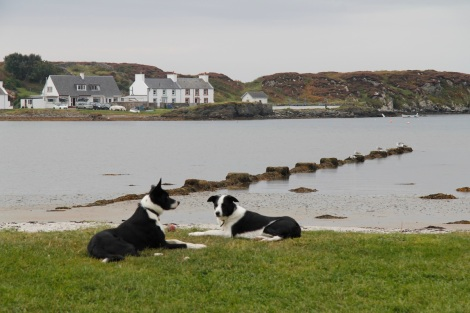 dogs at Port Ellen