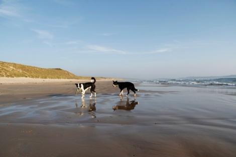 Dogs on Laggan Beach
