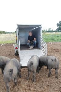 Here piggy piggy .....