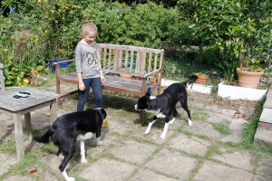 Katie and dogs
