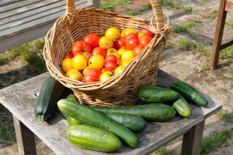 tomatoe haul