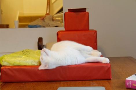 Birthday cat2