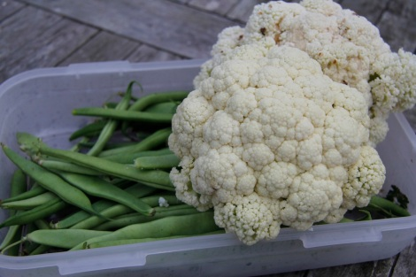 Cauliflower and beans