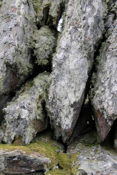 lichen rocks