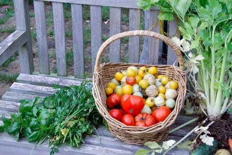And of course tomatoes and tomatillos and some herbs