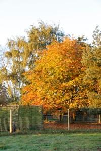 autumn colours3