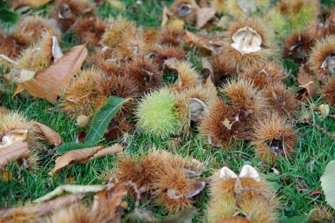chesnuts2