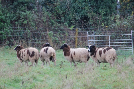 New ewes2
