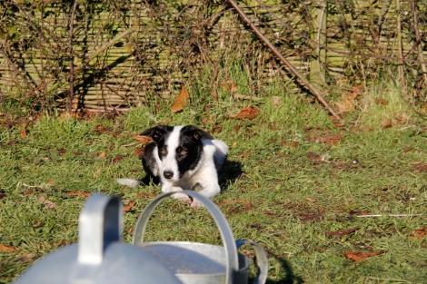 Daisy Watching turkeys