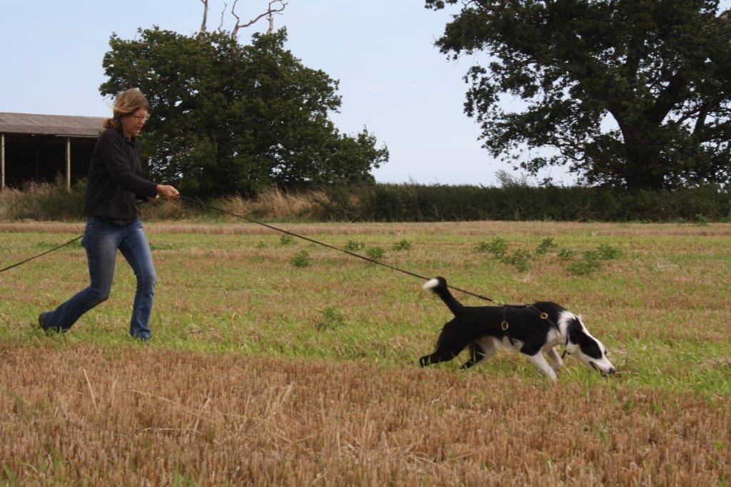 Traching Dog Walk At Heel Video