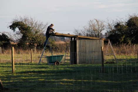 James making the sheep shelter