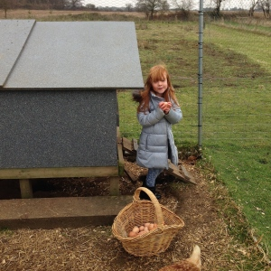 collecting eggs from the smallholding