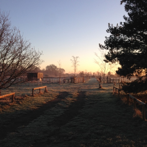 early morning on the site