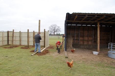 alpaca shelter and new chicken palace2