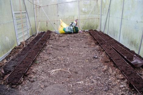 greenhouse beans
