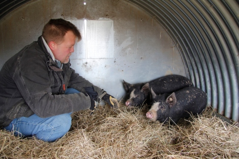 James and the piggies