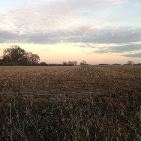 walk field