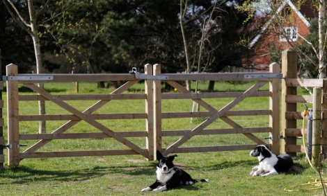 dogs by gate